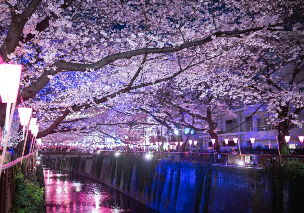 【東京デートコース】夜桜見るならココ!おすすめ名所3選