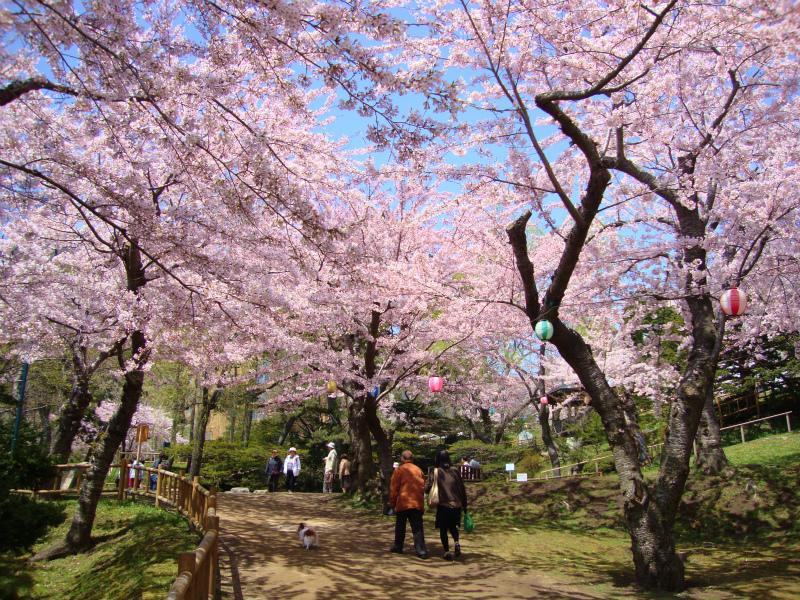 桜スポット③