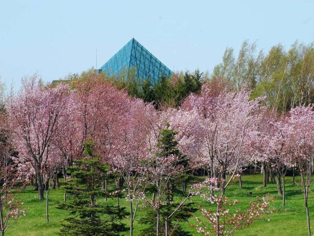 桜スポット⑤