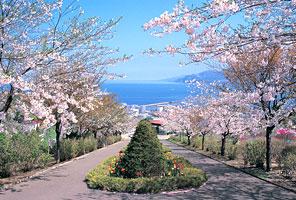 桜スポット⑥