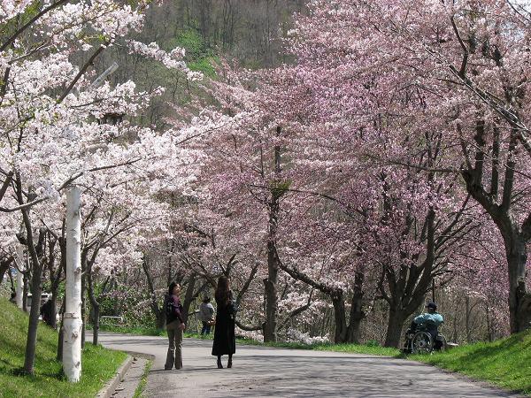 桜スポット⑧