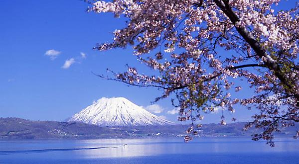 桜スポット⑨