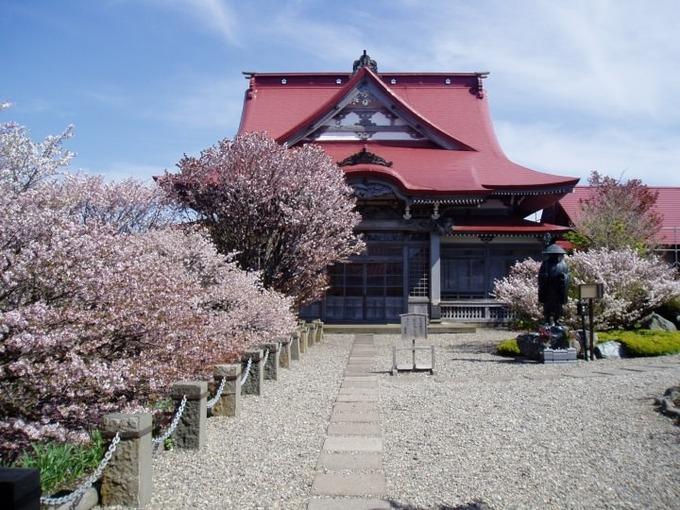 桜スポット⑫