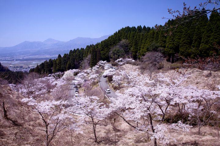 桜スポット⑭