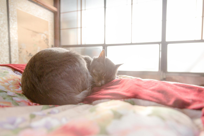 猫・布団・寝る