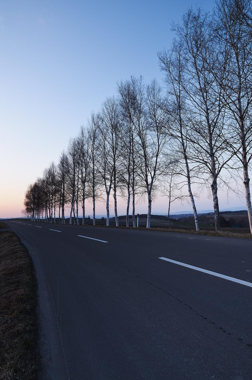 道路・夕方・並木道