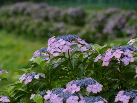 埼玉観光おすすめスポット!春夏秋冬の自然を満喫できる場所を集めました