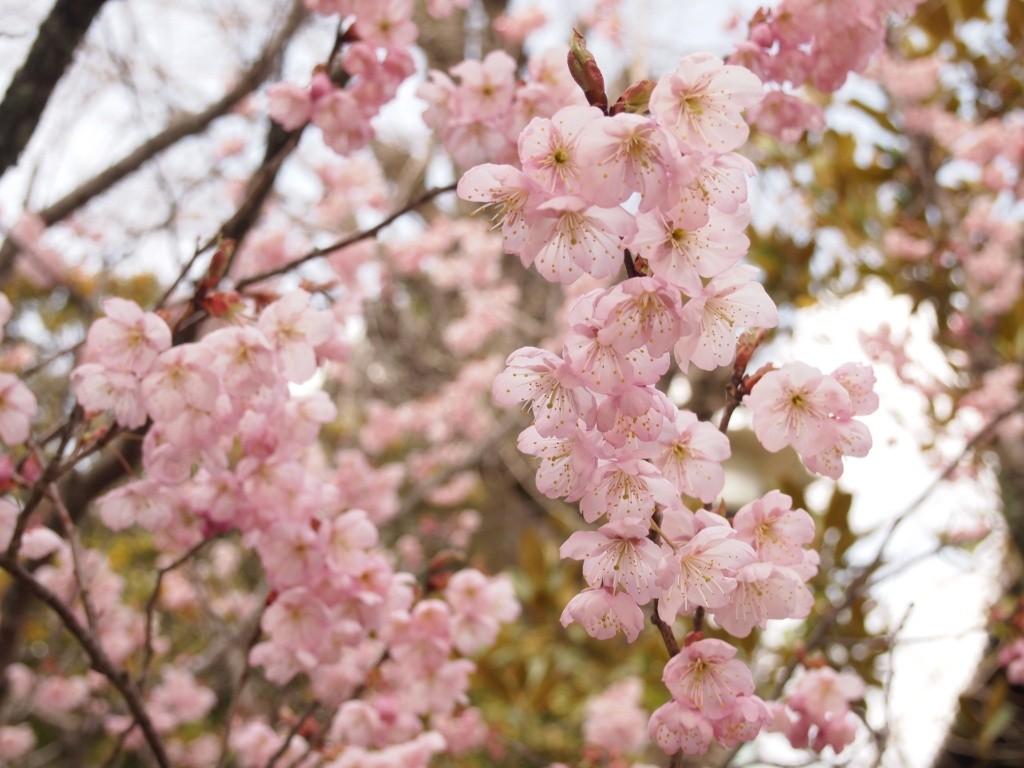 春分の日とは何をやる日でどんな意味がある?決め方や計算方法について