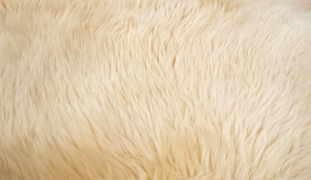 毛足の長いラグカーペットの掃除方法!簡単で楽なやり方や手入れの仕方を教えて!