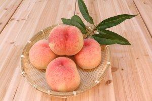 リンゴ狩りも完ペキ!美味しいリンゴの見分け方や選び方についてご紹介!